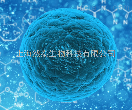 BEL-7402/FU细胞 BEL-7402/FU细胞